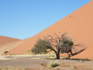Namibia Self Drive Holiday